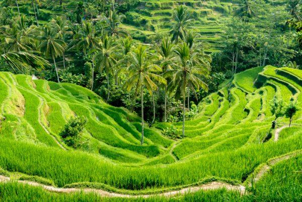 Bali potovanje